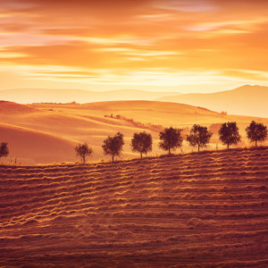 Beautiful countryside landscape, amazing orange sunset over golden soil hills, beauty of nature, agriculture and farming season, Tuscany, Italy