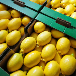 citrus case's at the factory for transporting